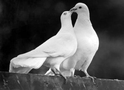 PMA pour toutes : la guerre au romantisme