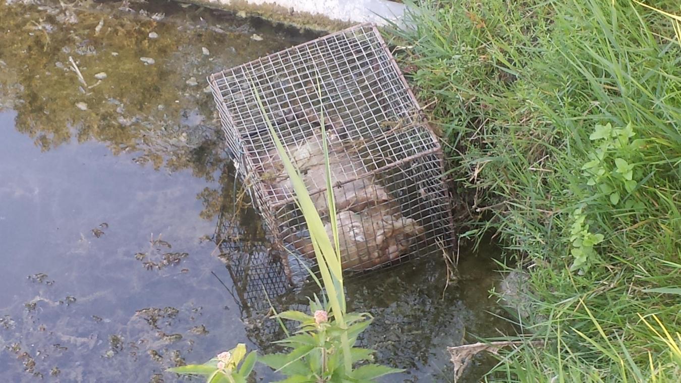 Un chien noyé dans une cage de 30 cm de long