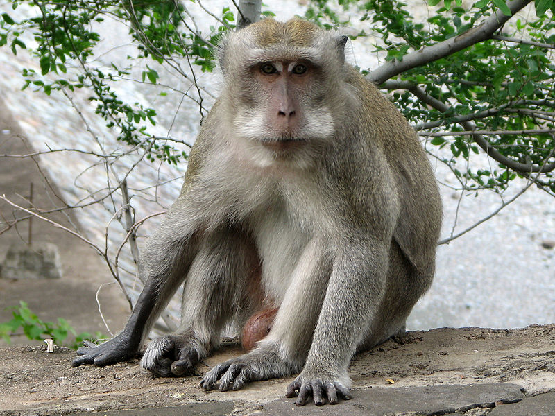 L'utilisation de singes pour les tests diesel de Volkswagen