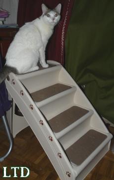 Escalier pour chat agé