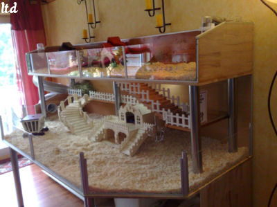 emission sur la vie sociale des cochons d inde. Black Bedroom Furniture Sets. Home Design Ideas
