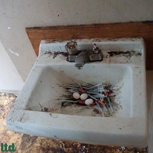 Des oeufs de pigeons au milieu de seringues...
