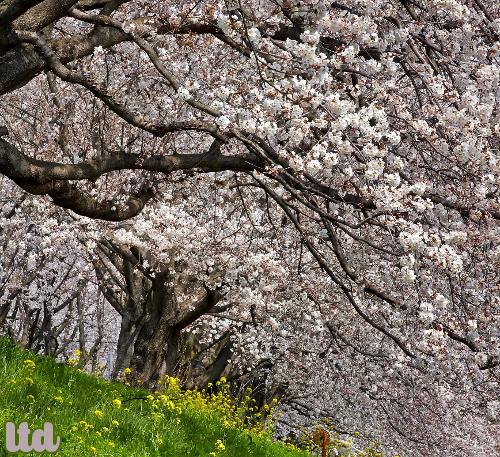 Un nouveau printemps pour la planète!