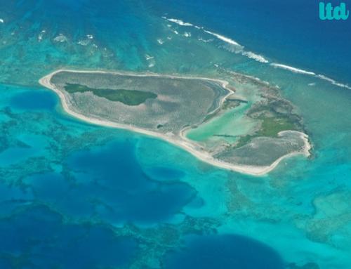 Protéger les coraux, la vie de l'océan