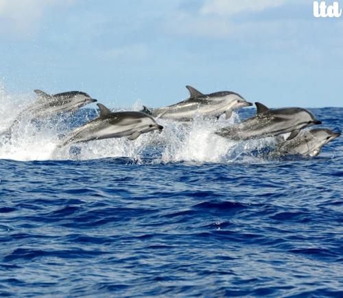 La vie marine appartient à l'océan