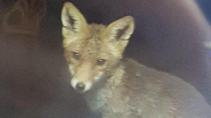 Sauvons les renards de l'hôpital psychiatrique Pierre-Janet du Havre