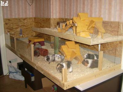 Cochon d inde maison ventana blog for Construire cabane lapin