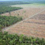 Les vertébrés et l'anéantissement biologique par la sixième extinction de masse
